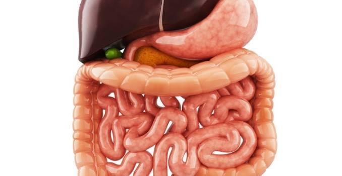 Что приводит к реактивному гепатиту и как лечить воспаление печени