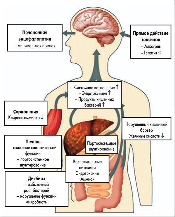 печеночная кома симптомы