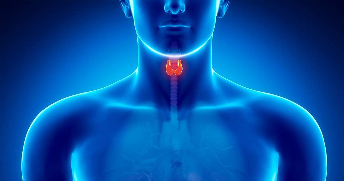 щитовидная железа происхождение