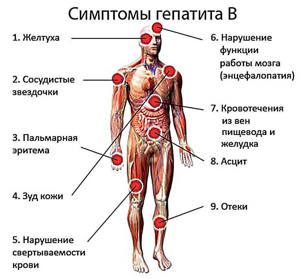 Гепатит а и б: чем отличаются и чем похожи заболевания, пути передачи, особенности вакцинация,
