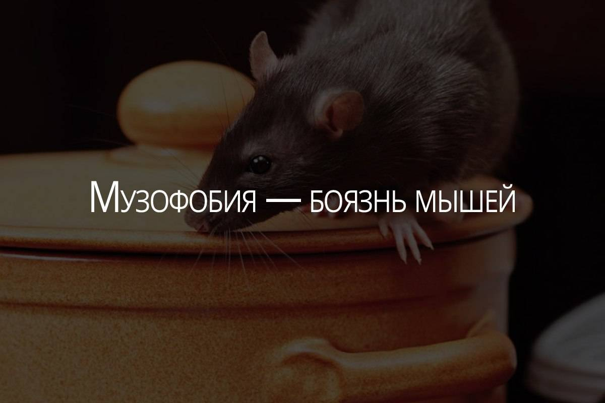 """Как избавиться от фобии? - запись пользователя наташа (gerdamamaviki) в сообществе психология в категории клуб """"психологической помощи"""" - babyblog.ru"""