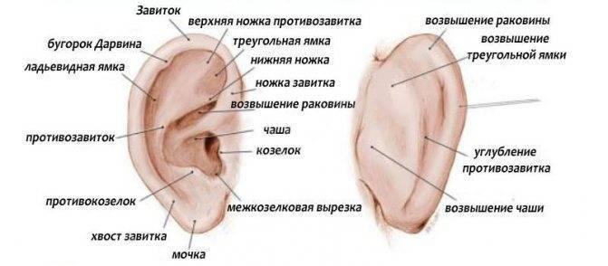 Шишка возле козелка уха болит