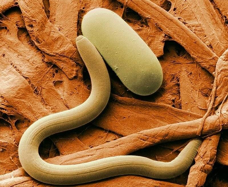 как избавиться от паразитов