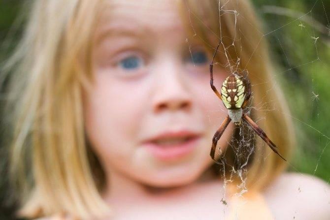 Как самостоятельно избавиться от фобии пауков и насекомых