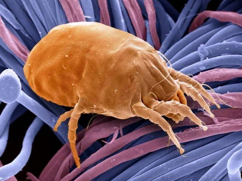 Паразиты и аллергия — взаимосвязь