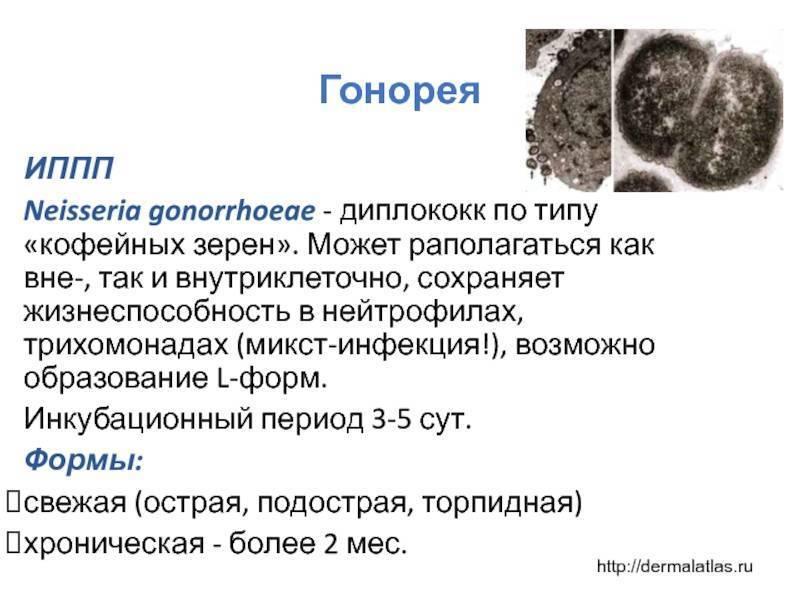Трихомониаз: инкубационный период, симптомы, пути заражения