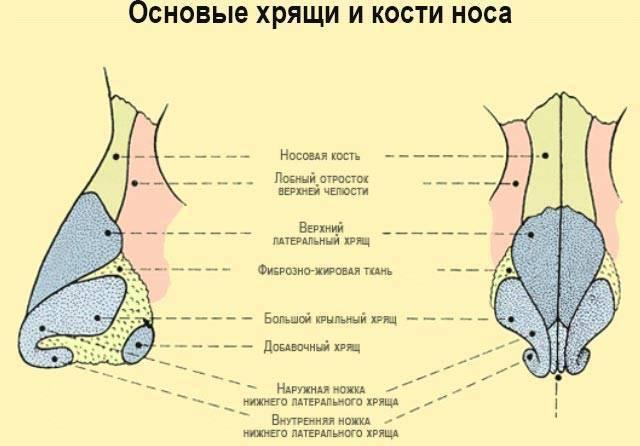 Какие наросты могут появиться в носу человека?