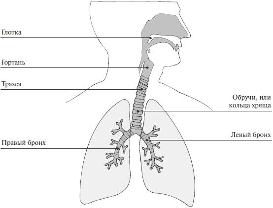 Болит трахея и воспаление верхних дыхательных путей глотки – лечение