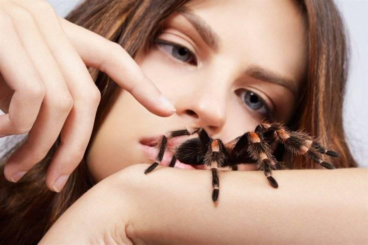 Инсектофобия (боязнь насекомых): причины и лечение