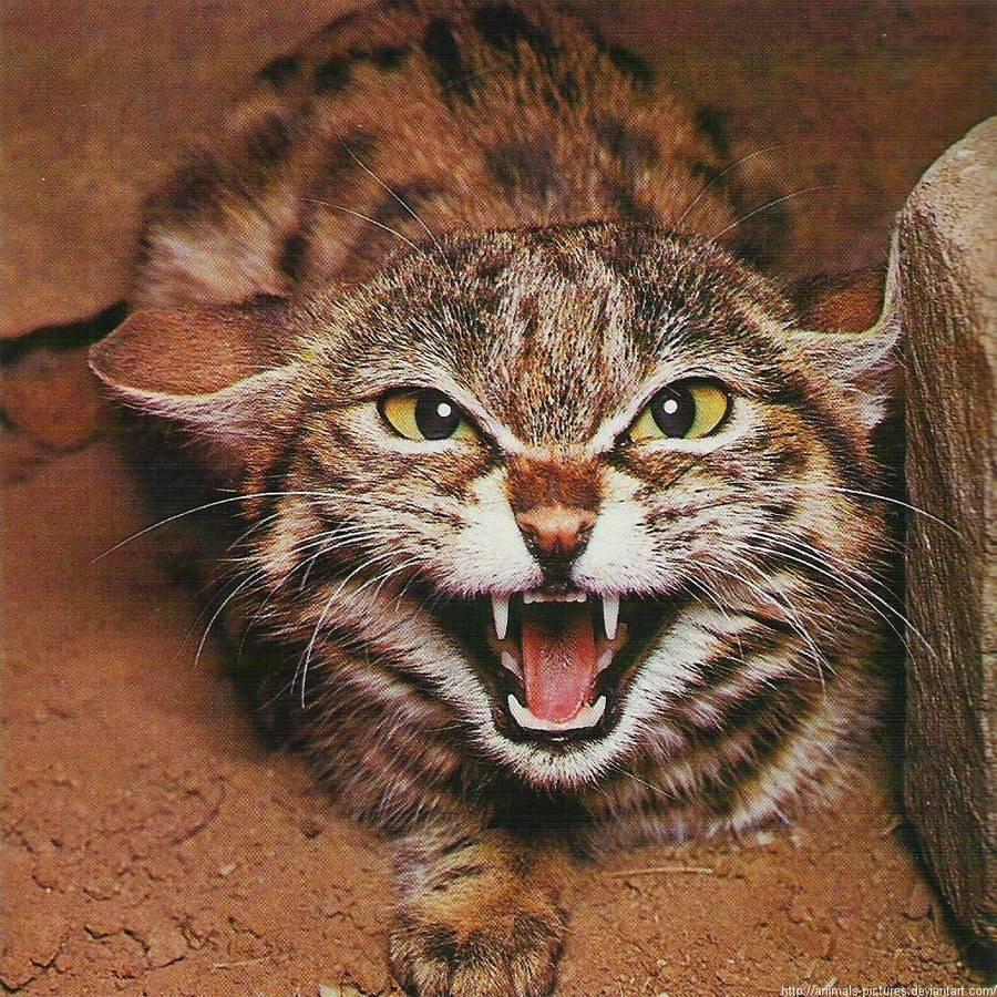 Айлурофобия: что это такое? как еще называется боязнь кошек? причины фобии. как побороть страх котов?