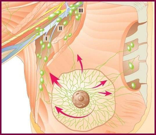 увеличение подмышечных лимфоузлов при мастопатии