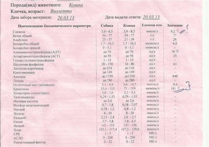 Общий анализ крови обозначение холестерина