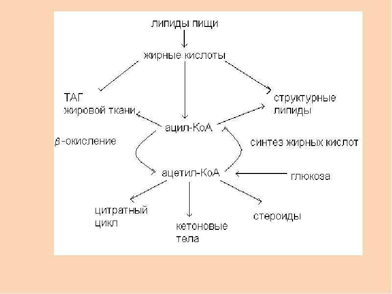 Липидный обмен - lipid metabolism - qwe.wiki