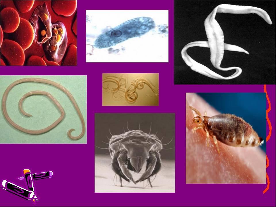 Паразиты в организме человека