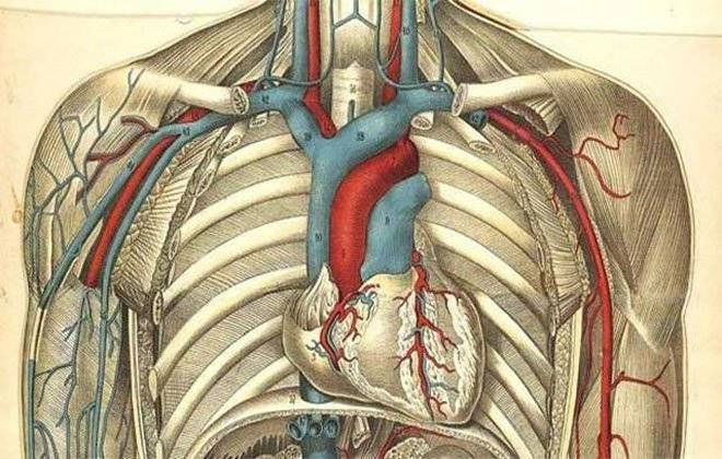 Атеросклероз брахиоцефальных артерий стенозирующего и нестенозирующего типа