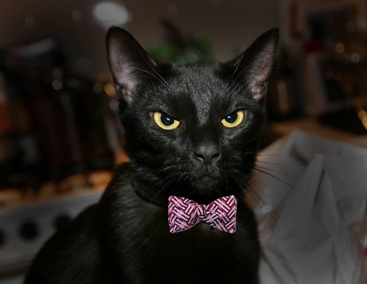 Айлурофобия: боязнь кошек, признаки и симптомы
