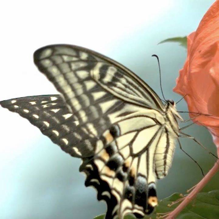 Инсектофобия или страх насекомых