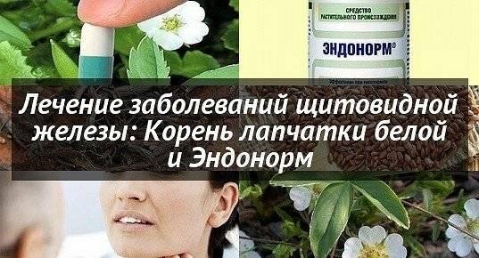 Корень лапчатки белой лечение щитовидной железы эндонорм