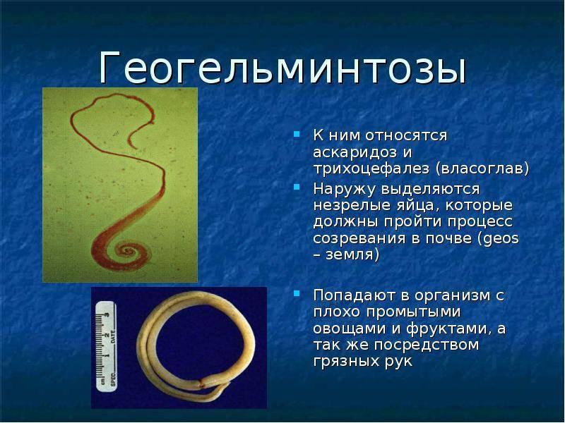 Трихоцефалез: что это, причины, симптомы и лечение   все о паразитах