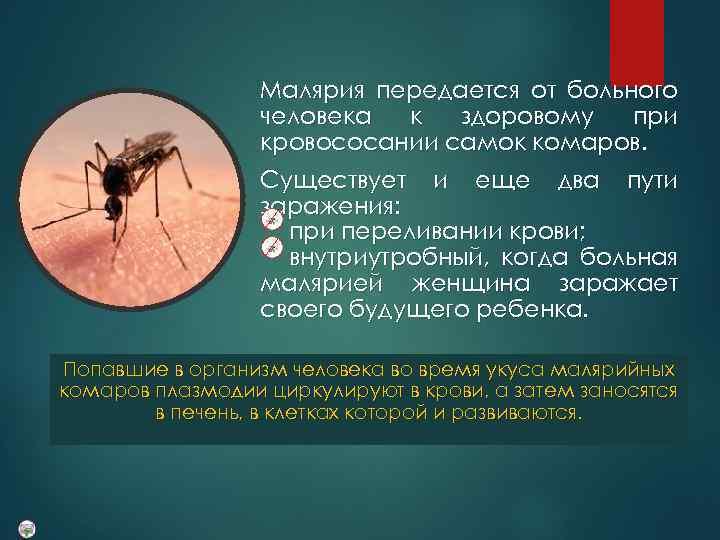 малярия передается от человека к человеку