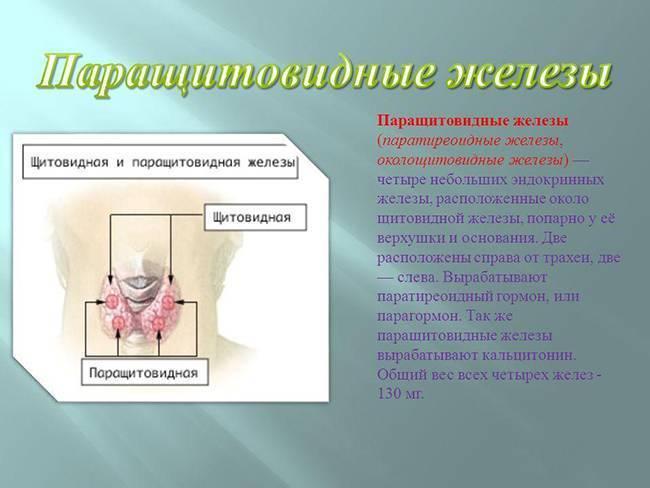 Паращитовидная железа - функции и заболевания. гормоны околощитовидных желез и симптомы гиперпаратиреоза