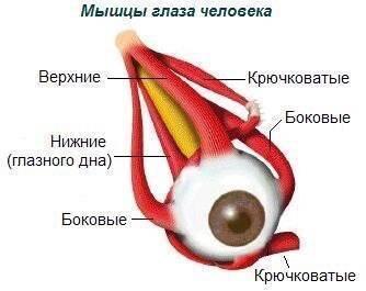 Мышцы глаза - укрепление, упражнения, тренировка