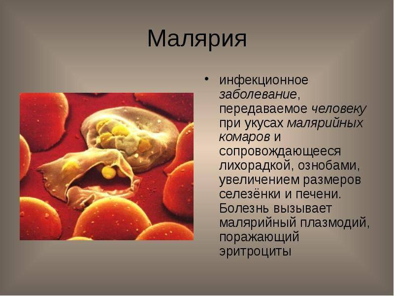 Возбудитель малярии - жизненный цикл,  пути заражения человека и диагностика заболевания