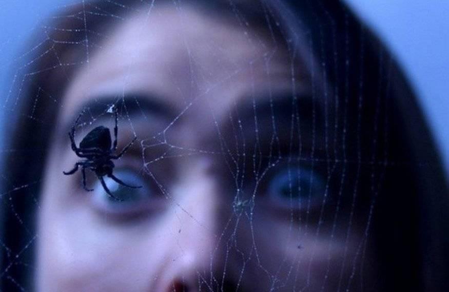 Боязнь пауков или арахнофобия