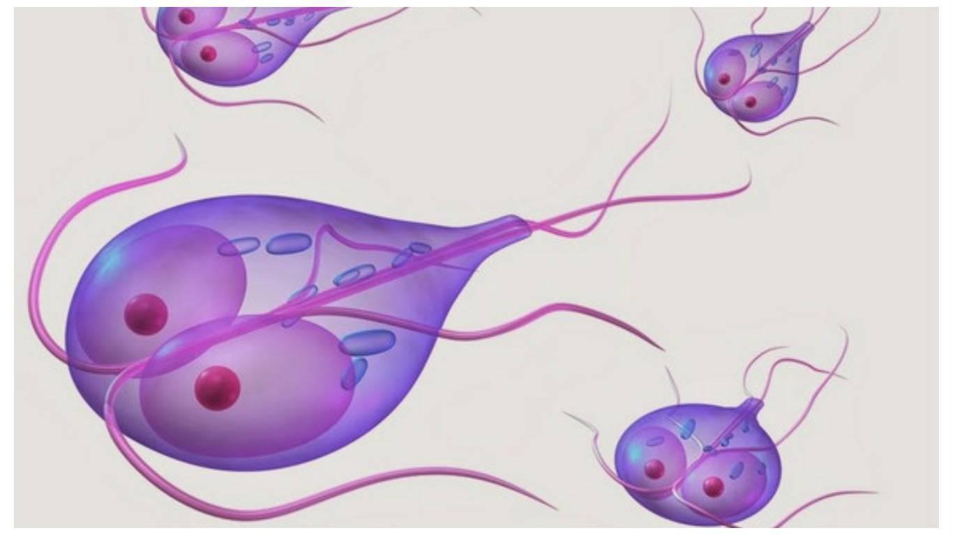 Лямблиоз у детей - симптомы и лечение