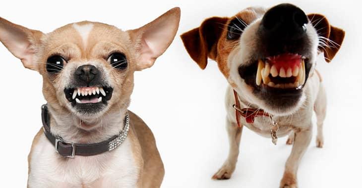 Каковы причины возникновения боязни собак и как от нее избавиться?