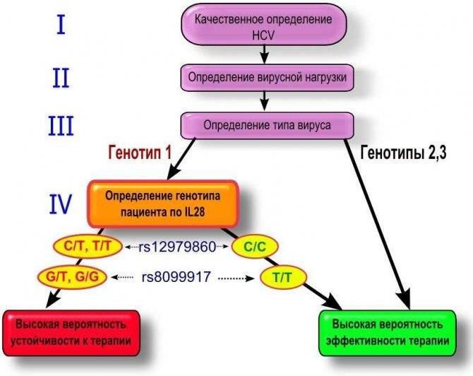 гепатит с генотип 1 что это значит