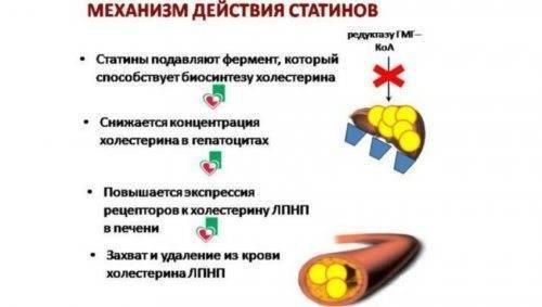 Статины от холестерина – самые эффективные и безопасные, список, польза и вред