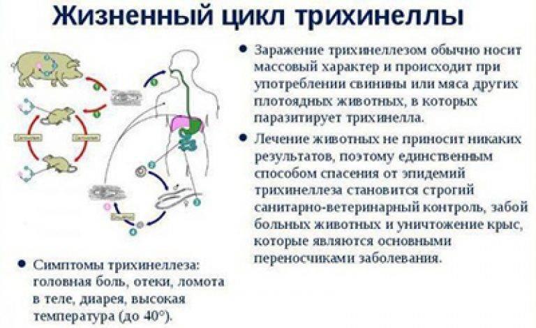 признаки трихинеллеза у человека