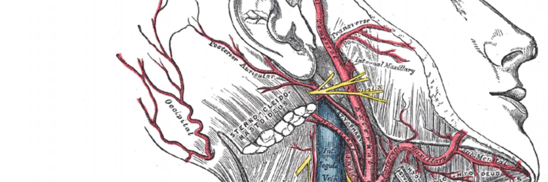 Симптомы невралгии языкоглоточного нерва, и методы лечения