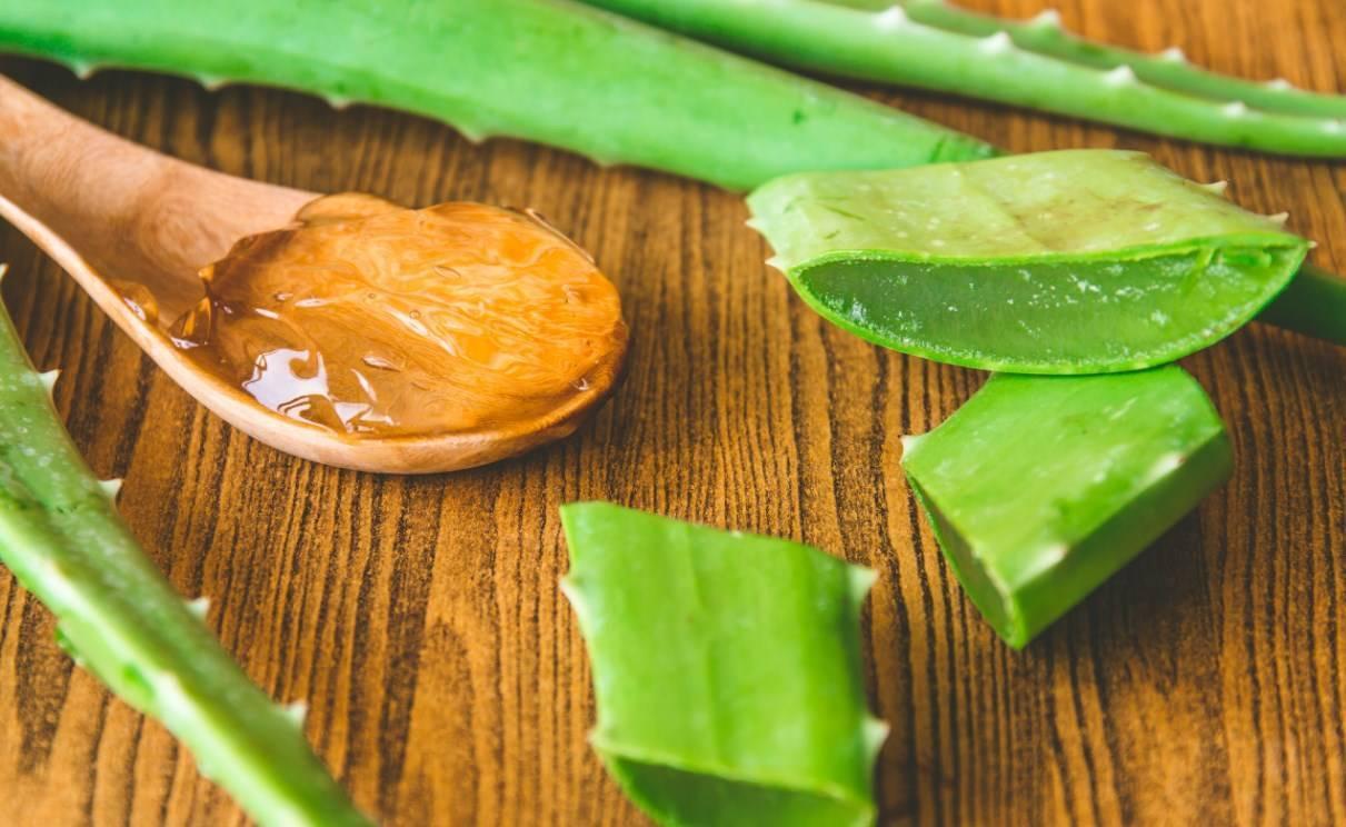 как приготовить алоэ с медом от кашля