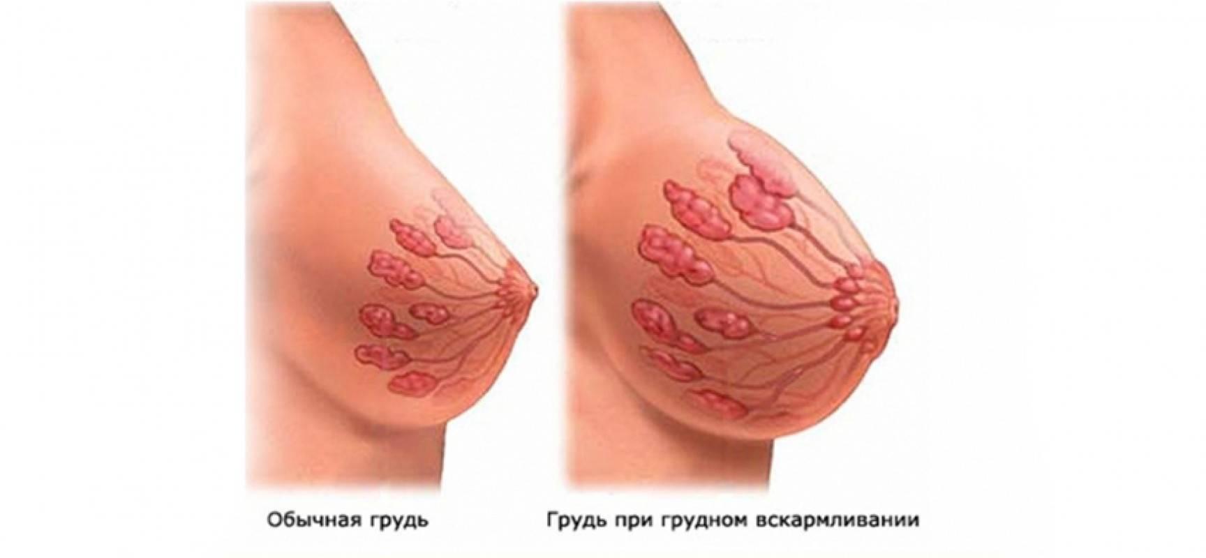 набухает и болит грудь