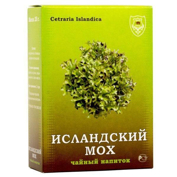 Исландский мох: лечебные свойства травы и противопоказания