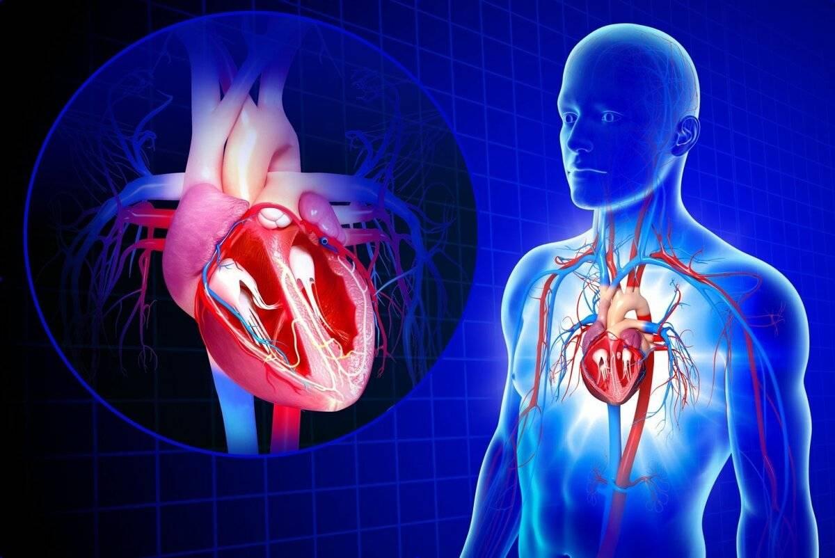 Атеросклеротический кардиосклероз — диагностика и профилактика. сколько живут при данной патологии?