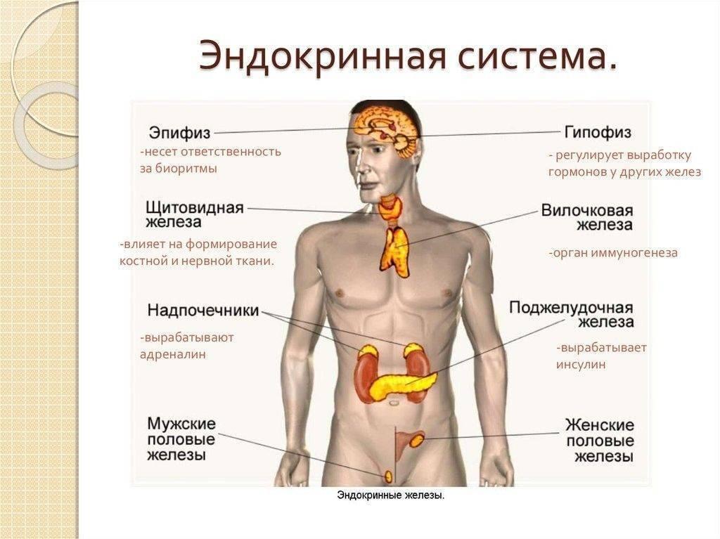 эндокринные заболевания человека