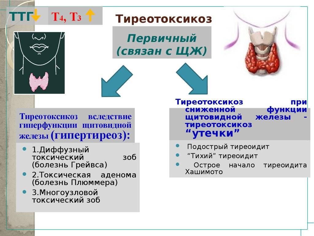 щитовидная железа гиперфункция
