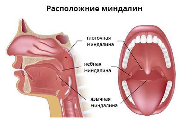 Сколько дней держится температура при ангине у детей и взрослых