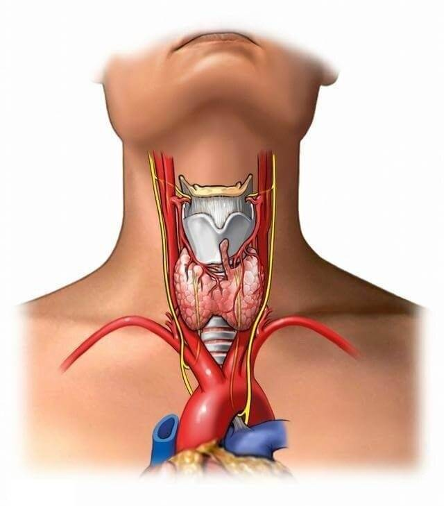щитовидка и климакс