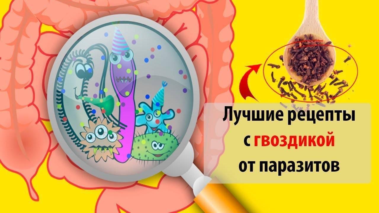 Полынь и гвоздика от паразитов как принимать