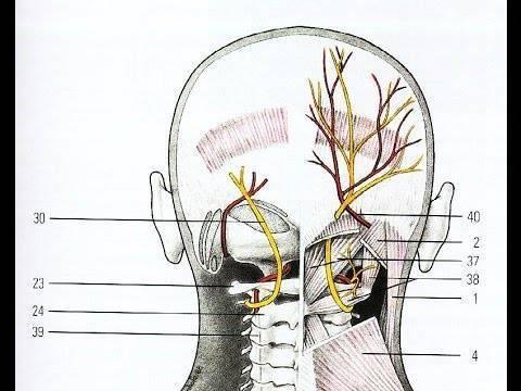 Как вылечить невралгию затылочного нерва
