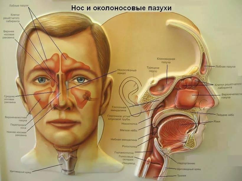 Патологии вызывающие боли в области переносицы и лба: когда следует обратится к врачу?