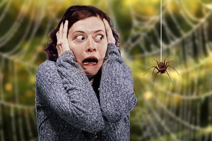 фобия пауков