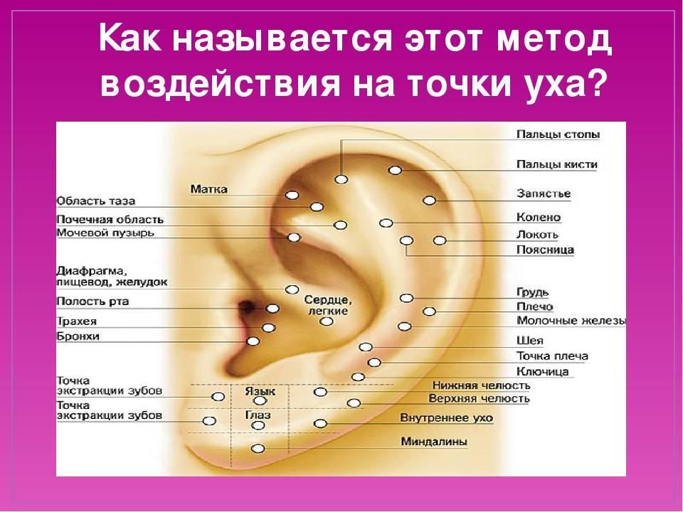 биологически активные точки на ухе