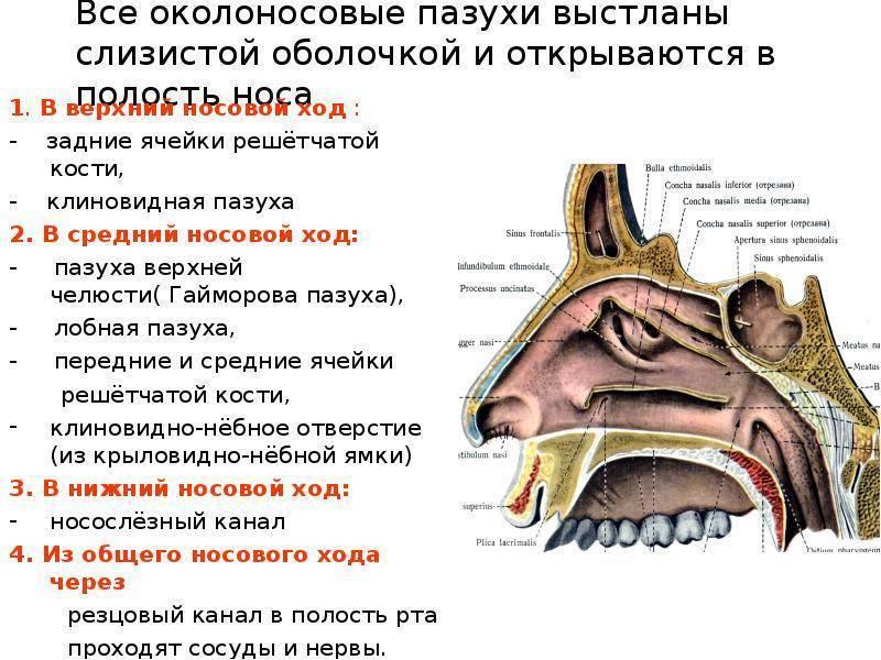 Сфеноидит — воспаление клиновидной пазухи