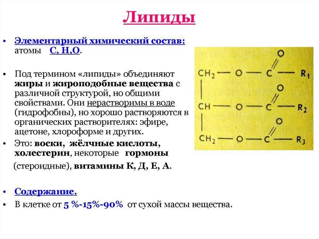 Липиды — википедия с видео // wiki 2