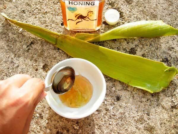 Сочетание алоэ и меда при лечения кашля